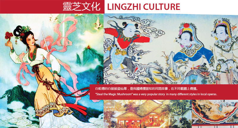 lingzhi culture.jpg